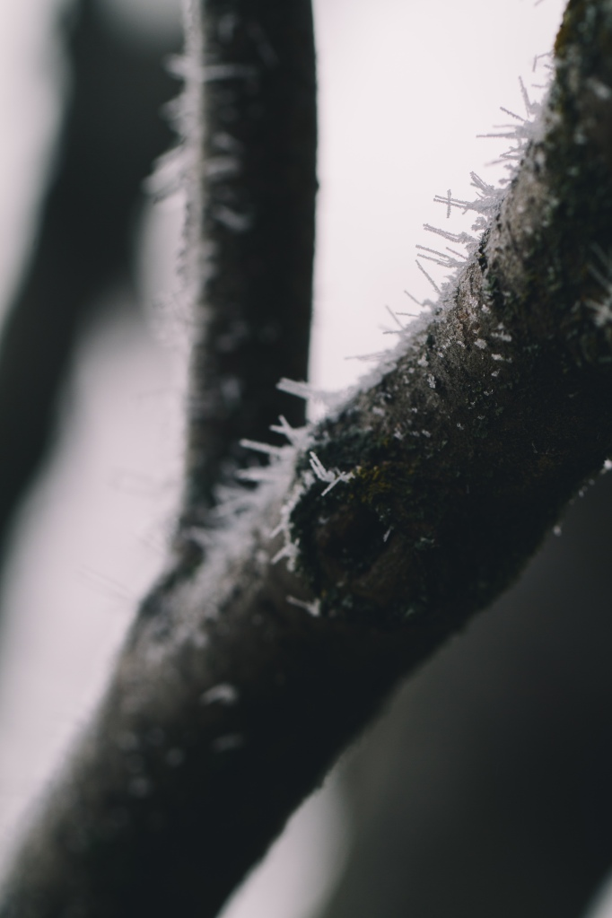 winter2013-21
