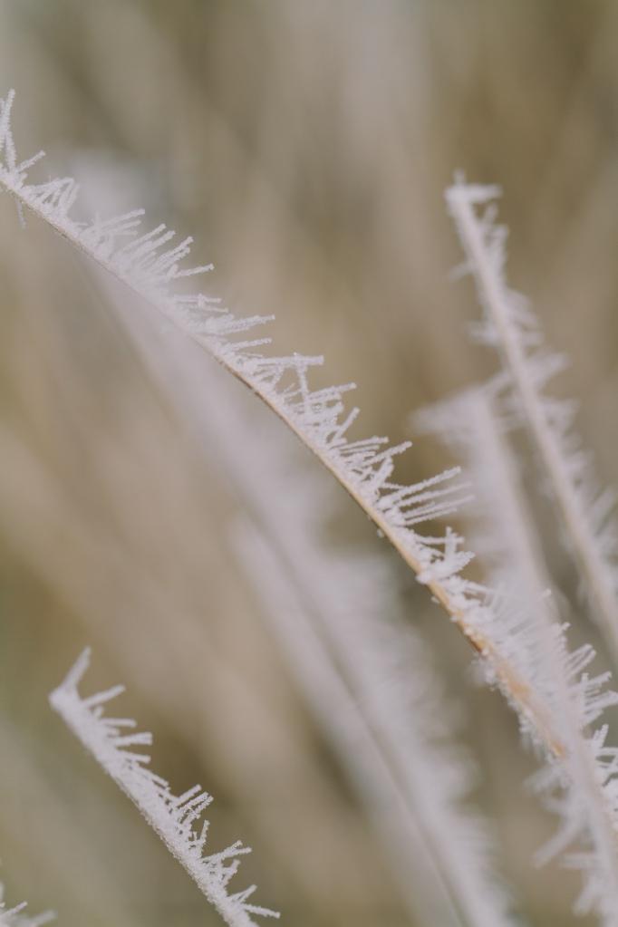 winter2013-25
